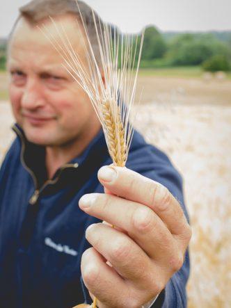 Denis, agriculteur céréalier et producteur de bière dans le Véxin
