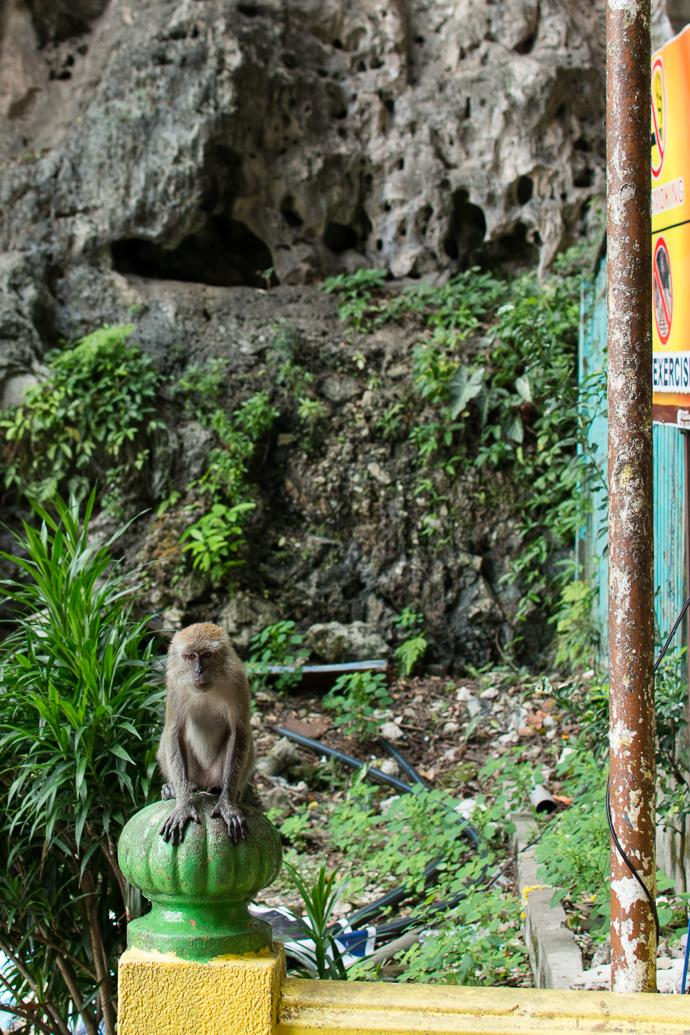 Des singes par centaine, Batu Caves