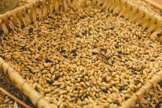 Malt, la base de la production de bière
