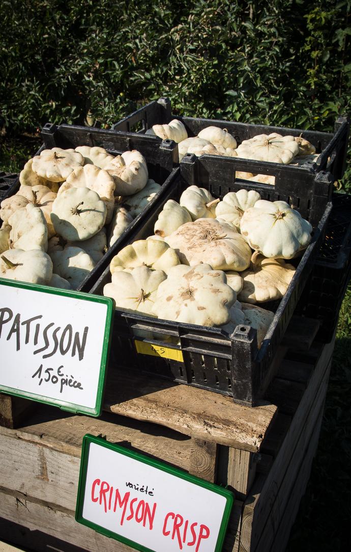 Récoltez vos pâtissons à la cueillette de la Ferme de Viltain, Paris