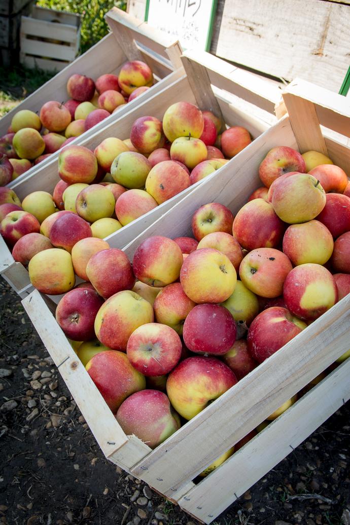 Une grande variété de fruits du verger sont présents sur place et cultivés sans pesticides, Ferme de Viltain, Paris