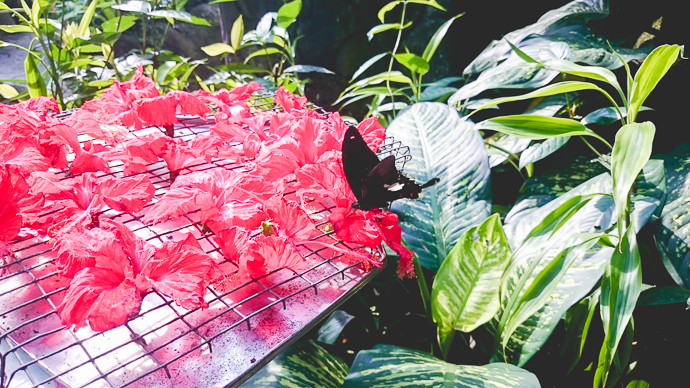 Le Parc aux Papillons, Kuala Lumpur, Malaisie