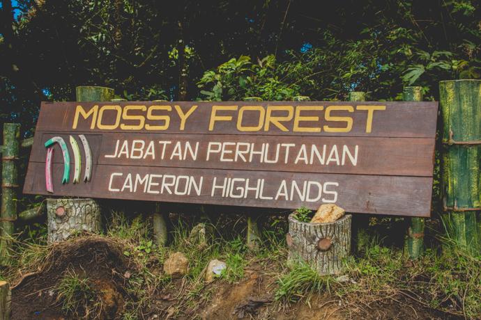 Mossy Forest, Jabatan Perhutanan, Province de Cameron Highlands, Malaisie