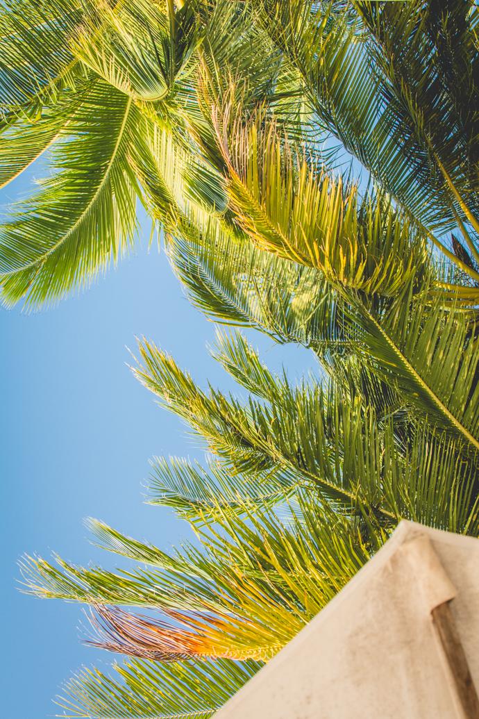 Palmiers, mer de Chine, Perenthians, Malaisie
