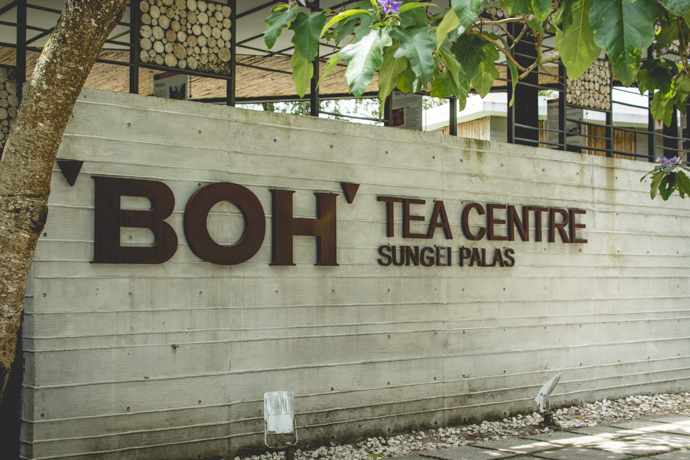 Visite incontournable à faire à Cameron Highlands, Tanah Rata, la Boh Tea Estate