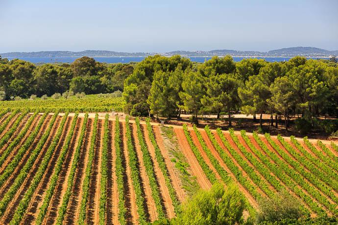 domaine Figuière : les vignes familiales