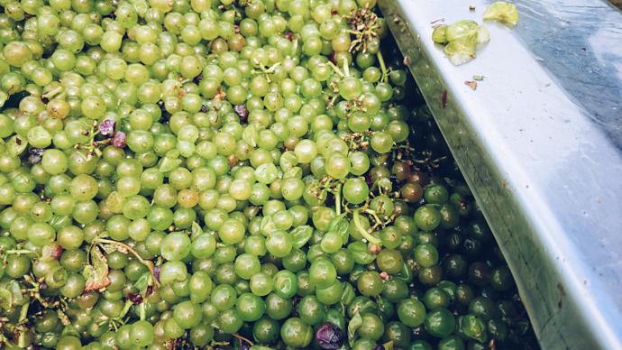 En avant pour la Foire aux Vins Monoprix 2017 : les vins rebelles