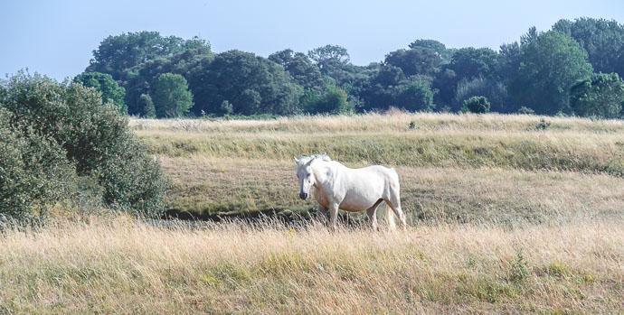 Cheval dans les Salines de Millanc - Nantes - Muscadet