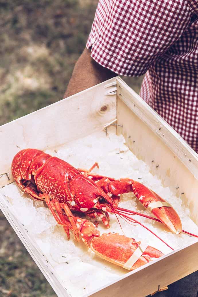 Un homard fraîchement péché pour un déjeuner en plein air - Muscadet