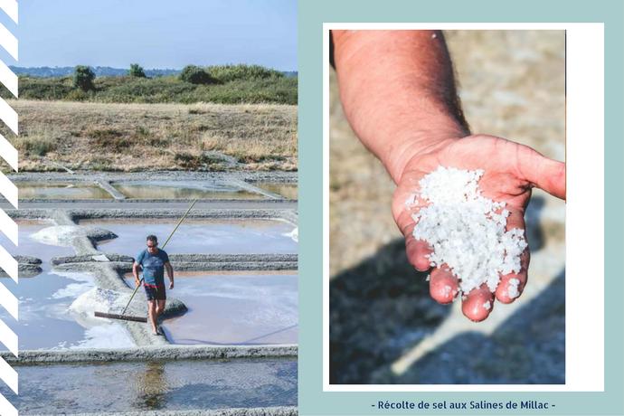 L'or blanc : à la découverte du sel des Salines de Millac - Muscadet