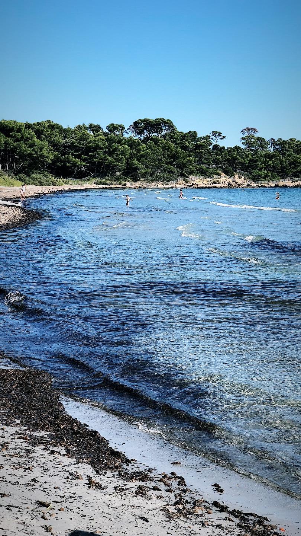 Figuière - La Londe les Maures - vignes entre terre et mer