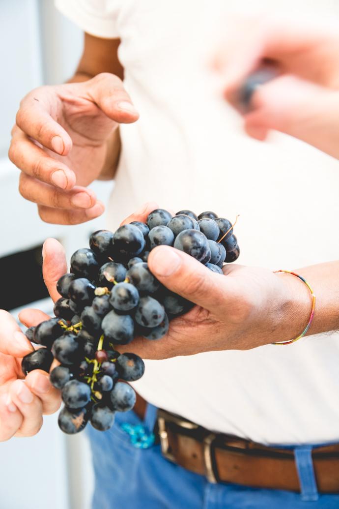 Grappe de raisins rouge
