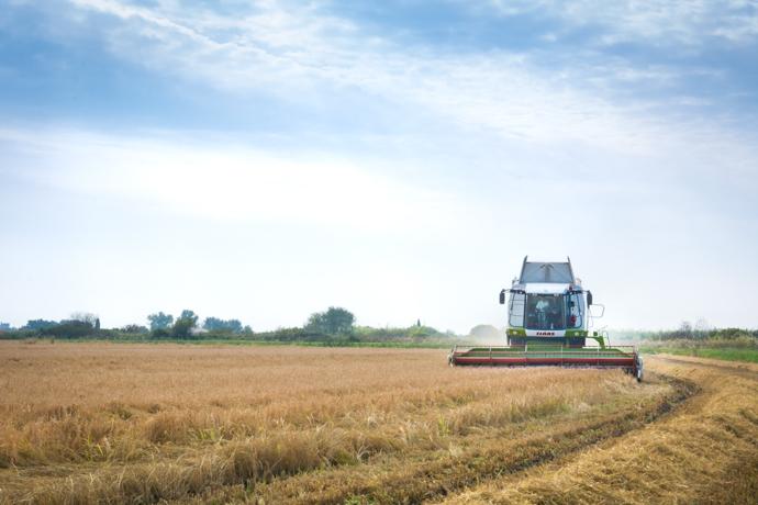 Récolte et Moisson du Riz de Camargue
