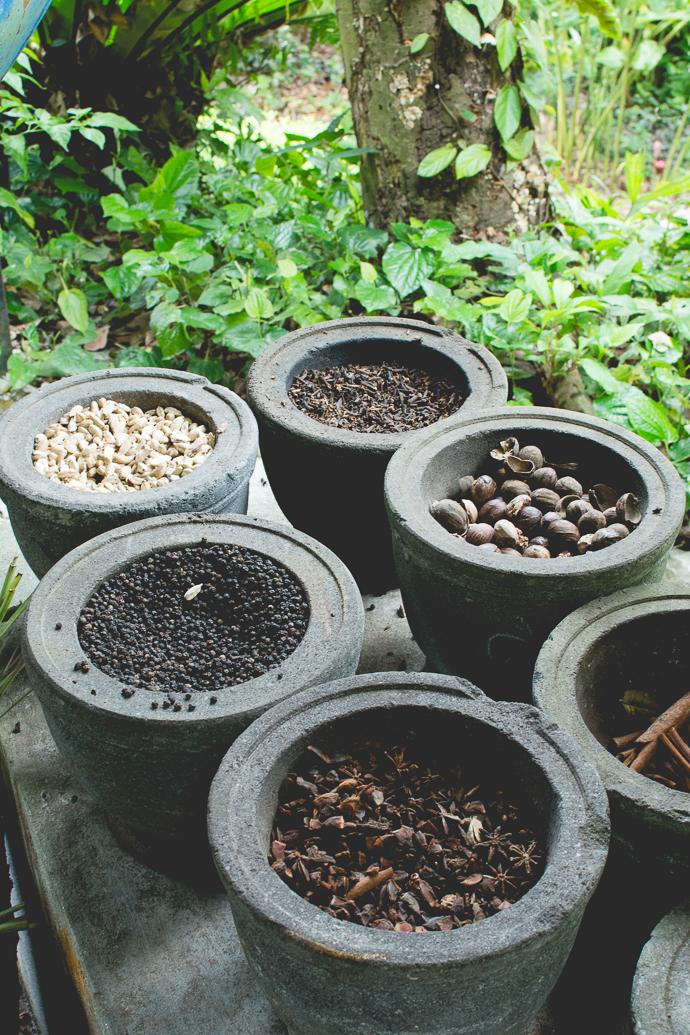 Les épices récoltées au Tropical Spice Garden, Penang, Malaisie