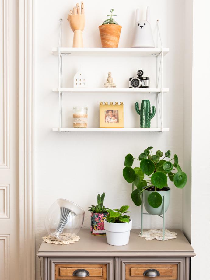 Pilea Peperomioides, une plante facile d'entretien et qui vous donnera une multitude de boutures