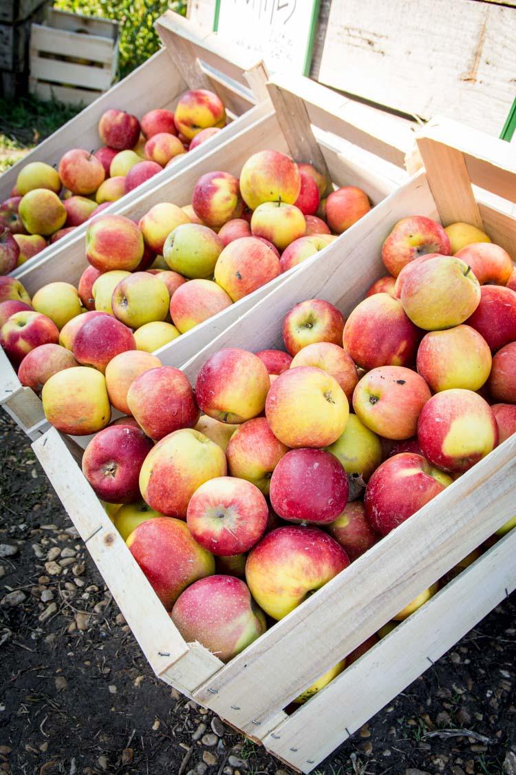 Comment cuisiner les fruits & légumes frais ?