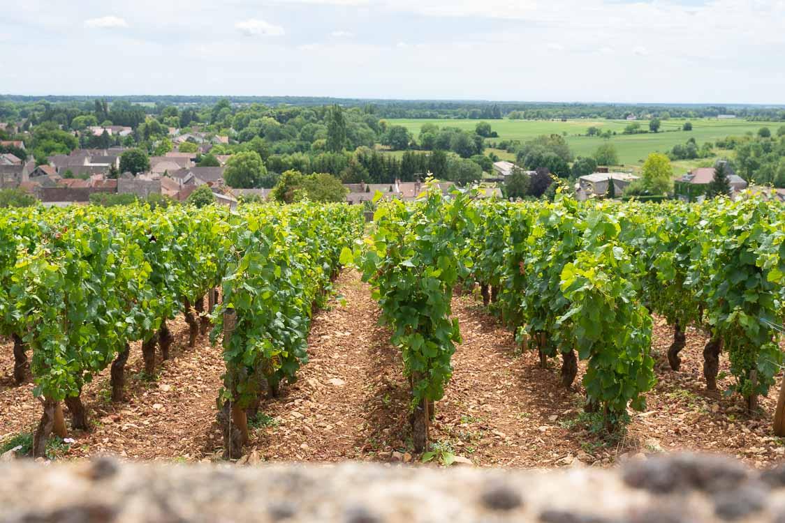 Portfolio - Shooting pour Bourgogne Vigne en Verre 2020